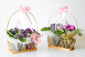 African Violets - Basket gifts — Stock Photo