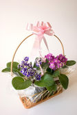 Basket of flowers - gift — Stock Photo