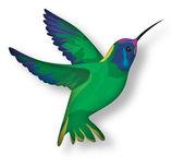 Illustration of colibri bird — Stock Photo
