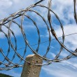 Barbed wire boundary — Stock Photo