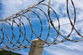 Barbed wire boundary — Stockfoto