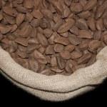 Brazil nut — Stock Photo