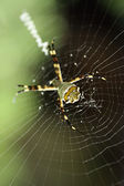 Web and spider — Stock Photo