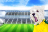 Brazilian west dog screaming goal — Zdjęcie stockowe