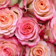 Pink roses background — Stock Photo #19027383