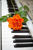 Music and flower — Stock Photo