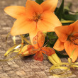 Orange lily with decorations — Stock Photo #19717293