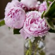 Peonies — Stock Photo #15437277