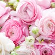 Ranunculus — Stock Photo #25332773