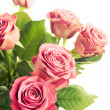 Beautiful roses — Stock Photo