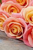 Красивые розы — Стоковое фото