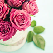 Krásné růže — Stock fotografie