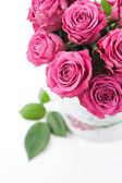 Beautiful roses — Foto Stock