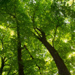 Stock Photo: Green forest with sun peaking in