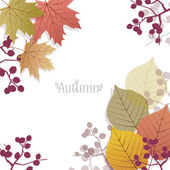 Beautiful seasonal Background with autumn leaves and berries — Stok Vektör