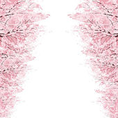 Rows of Cherry Blossom trees — Stock Vector