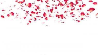 Láska slovo s lístky červené růže — Stock video