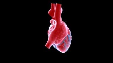 Coração xray — Vídeo Stock