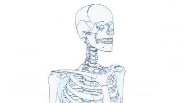Skeleton draw — Stock Video