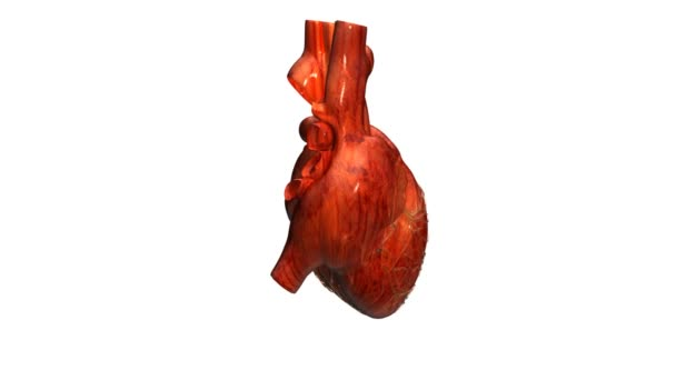 Corazón real — Vídeo de stock