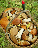 Mushrooms in a basket — Stockfoto