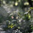 Cobweb in the woods — Stock Photo