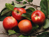 Fruit. Red apples — Stock Photo