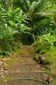 Makiki loop trail — Stock Photo