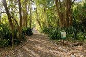 Hawaiian Tropical Trail — Stockfoto