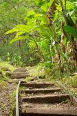 Hawaii tropical trail — Stock Photo