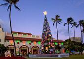 Honolulu christmas tree — Stock Photo