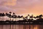 Hawaii palm tree sunset — Stock Photo