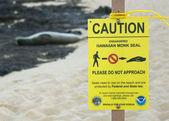 Endangered hawaiian monk seal — Stock Photo