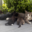 Stock Photo: Mother cat and kittens