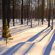 Foto Stock: Last rays of sun in winter forest.
