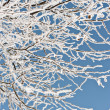 Background, beauty, blue, branch, cold, coniferous, fir, ice, natural, outdoors, park, pine, snow, tree, twig, white, winter, woods — Stock Photo