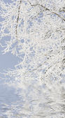 Winter, snow covered trees reflected in the water. In most of northern China, Mohe County area. — Stock Photo