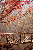Maple tree wooden bridge, in the scenic area of China — Stock Photo