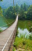 Most do džungle — Stock fotografie