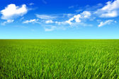 Green field and bright sun. — Stock Photo