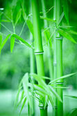 Bamboo forest, bamboo forest in China has special cultural symbol, clean, proud, — Stock Photo