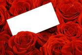 červené růže s prázdnou dar značky. — Stock fotografie