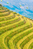 Rice field on terraced in mountain. — Stock Photo