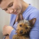 Yorkshire terrier yavrusu tutan kadın — Stok fotoğraf