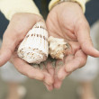 Close up of woman's hands holding seashells - Stock Photo