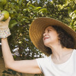 Senior Hispanic woman picking fruit - Stock Photo