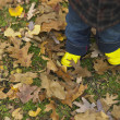 Stock Photo: Close up of young child's boots in leaves