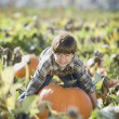 Pacific Islander boy trying to lift large pumpkin in pumpkin patch — Stock Photo