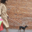 Woman with shopping bags walking dog — Stock Photo