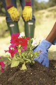 Low section of women gardening — Stock Photo